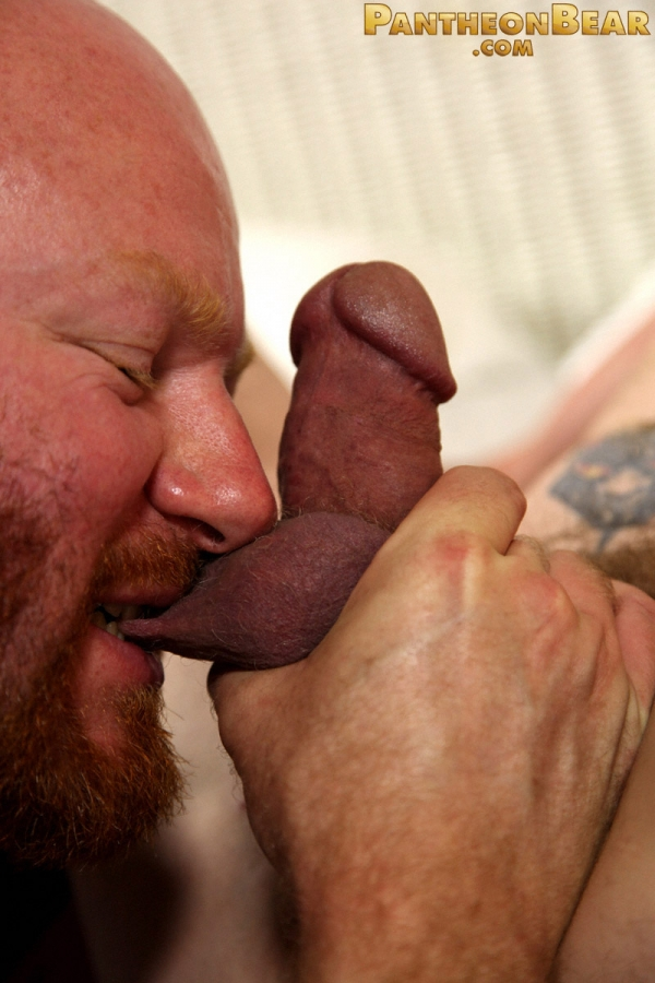image Fat bear gay sex download free ayden
